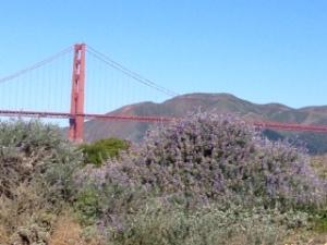 Golden Gate Bridge and Wildflowers