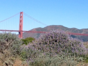 Golden Gate Bridge and Wildflowers