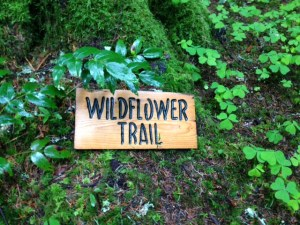 Wildflower Trail Forrest Lodge